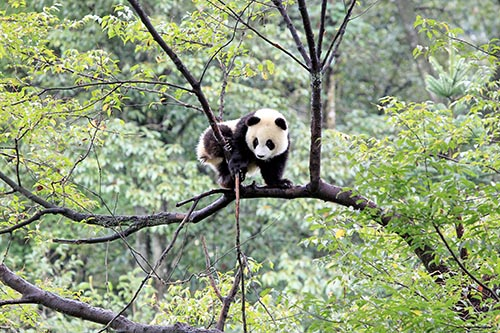 保护野生动物 建设美丽中国