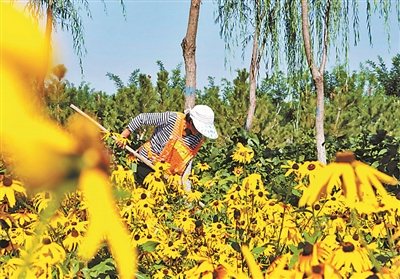 平原造林开展三年 新增94万亩森林