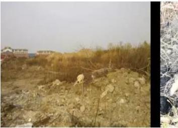 受污染的土地修复到什么程度就能建商场 建学校了?