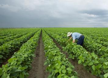 """土壤污染应该如何防治?环保部专家:""""带病生产""""也是风险管控模式(组图)"""